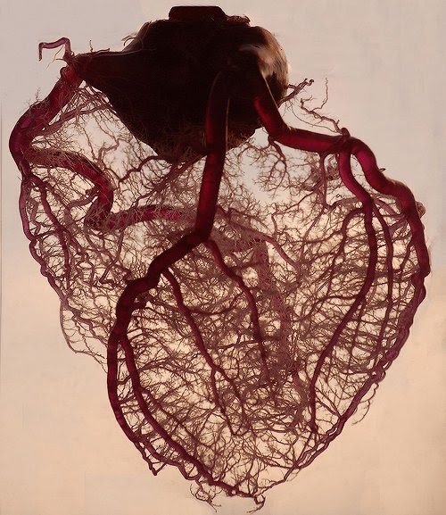 ?The human heart stripped of fat and muscle, with just the angel veins exposed.?