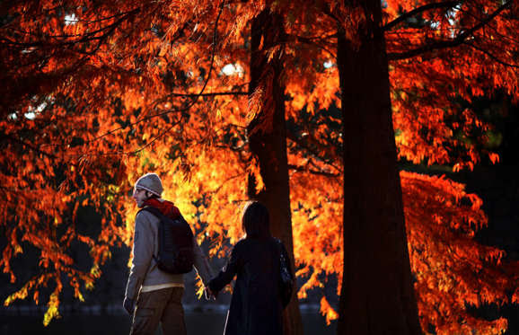 A couple strolls under the leaves turned red during an autumn weekend in Tokyo, Japan, Saturday, Nov. 22, 2008.(AP Photo/Junji Kurokawa)