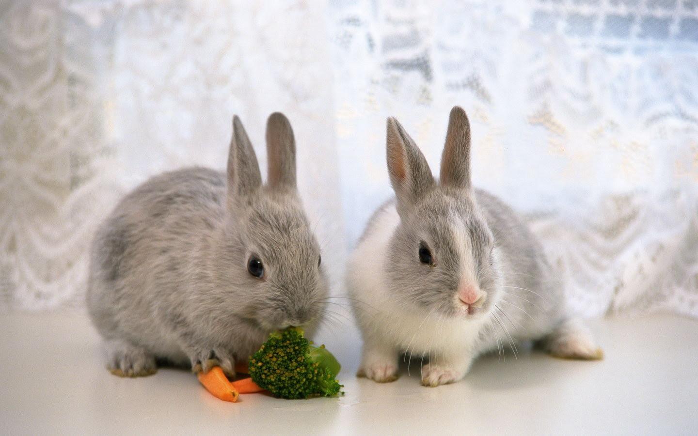 かわいいウサギの壁紙 3 1440x900 壁紙ダウンロード かわいい