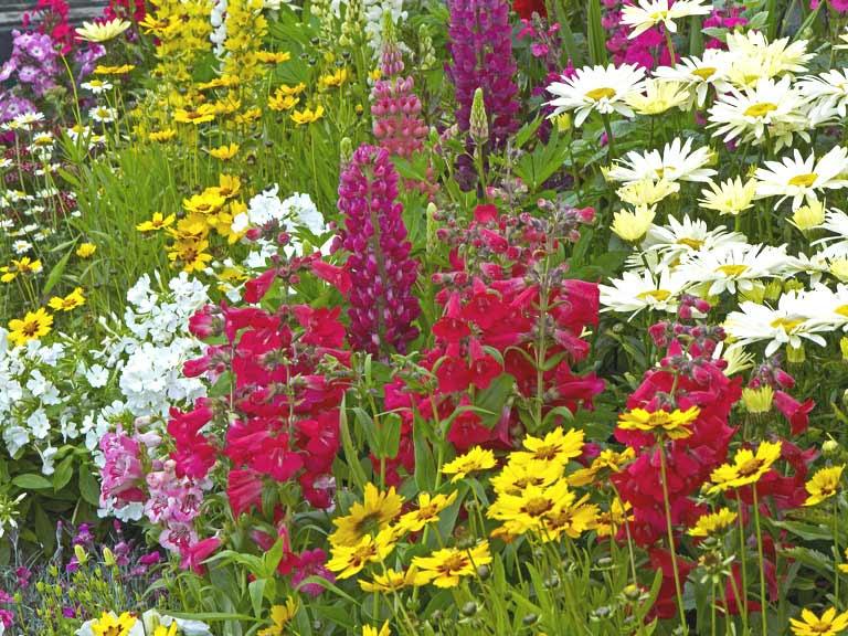 tips_planting_a_summer_garden_555819064_768