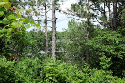 The scenic overlook of Cloquet Island.  They may wish to trim the underbrush.