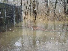 raptor flood 3