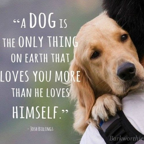 Top 100 Greatest Dog Quotes And Sayings With Images