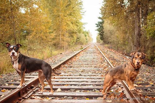 Train Tracks-9510