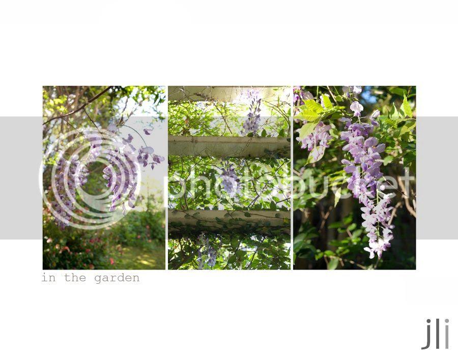 in the garden, dungog photo blog-3_zpsc6997683.jpg