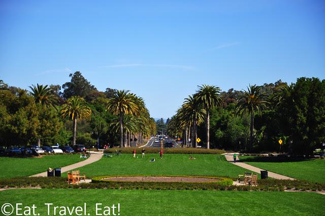 Grass/Palm Drive