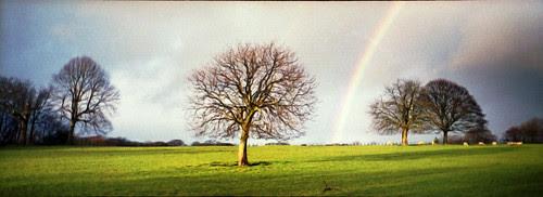 horse chestnut and rainbow by pho-Tony