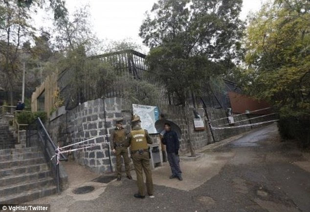 The entrances to the lion enclosures were closed off after the attack