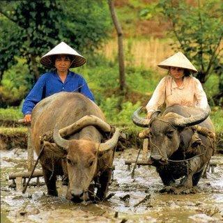 9600 Gambar Hitam Putih Petani Terbaik