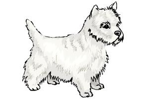 Ausmalbilder Hunde Kostenlos