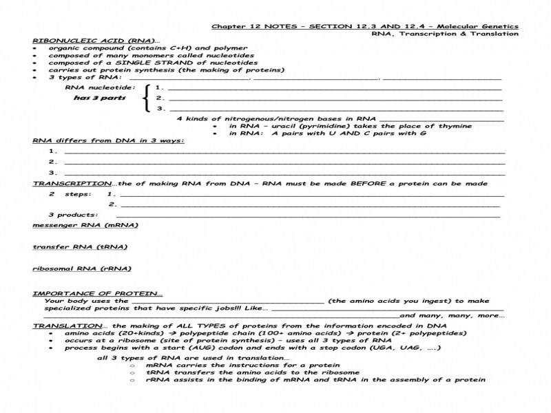 27 Section 12 3 Rna And Protein Synthesis Worksheet ...