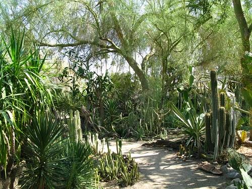My Back 40 Feet Palm Springs Part 2 Moorten Botanical Garden