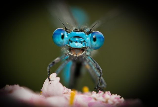 A Dragonfly early in the morning on a flower looks into the camera and it seems as if it laughing. Image Courtesy: Axel Bocker/Comedy Wildlife Photography Awards 2021