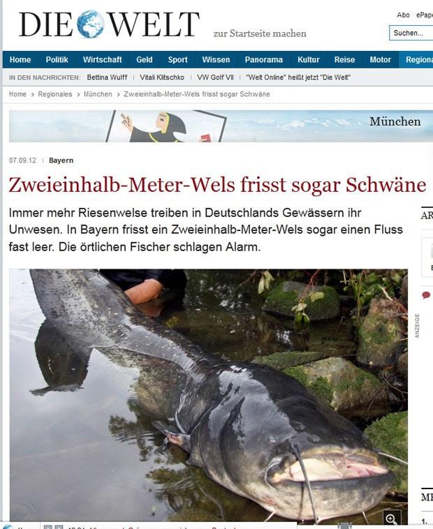 Peixe-gato de 2,16 metros que foi capturado em rio alemão. Espécie estaria provocando desiquilíbrio no rio Isen. (Foto: Reprodução)
