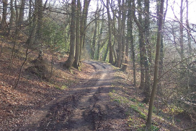 File:Byway through the Woods - geograph.org.uk - 44336.jpg