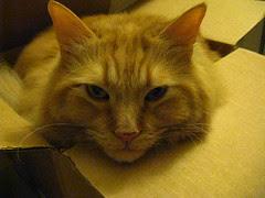 Jasper in a box (not the shoebox)