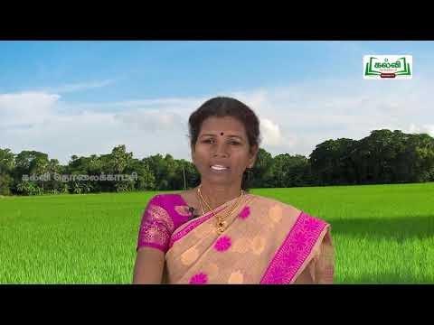 வகுப்பு 10  தமிழ்  7 நாகரிகம் தொழில் வணிகம் கவிதைப் பேழை  ஏர் புதிதா? Kalvi TV