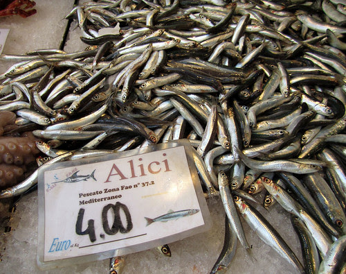 Swimming in Alici (Anchovies)