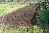 New vegetable plot, 12 May 2008