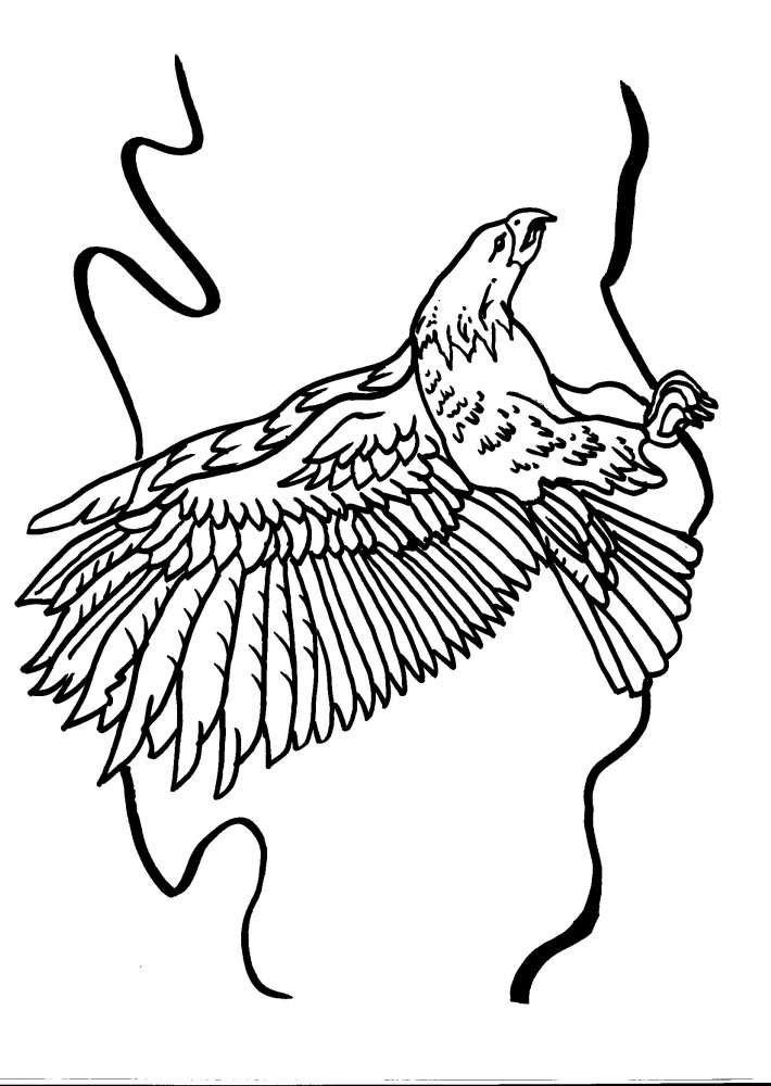 Disegni Animali Da Colorareaquiladisegno Da Colorare Aquila