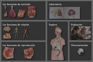 Web de anatomía básica - Nuestro cuerpo en un clik
