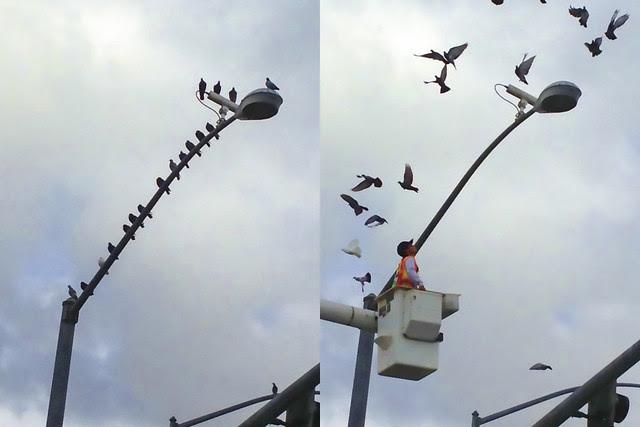 Birds on a light pole