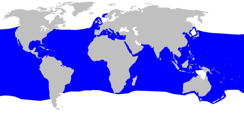 http://upload.wikimedia.org/wikipedia/en/thumb/a/a3/Isurus_oxyrinchus_distmap2.png/800px-Isurus_oxyrinchus_distmap2.png