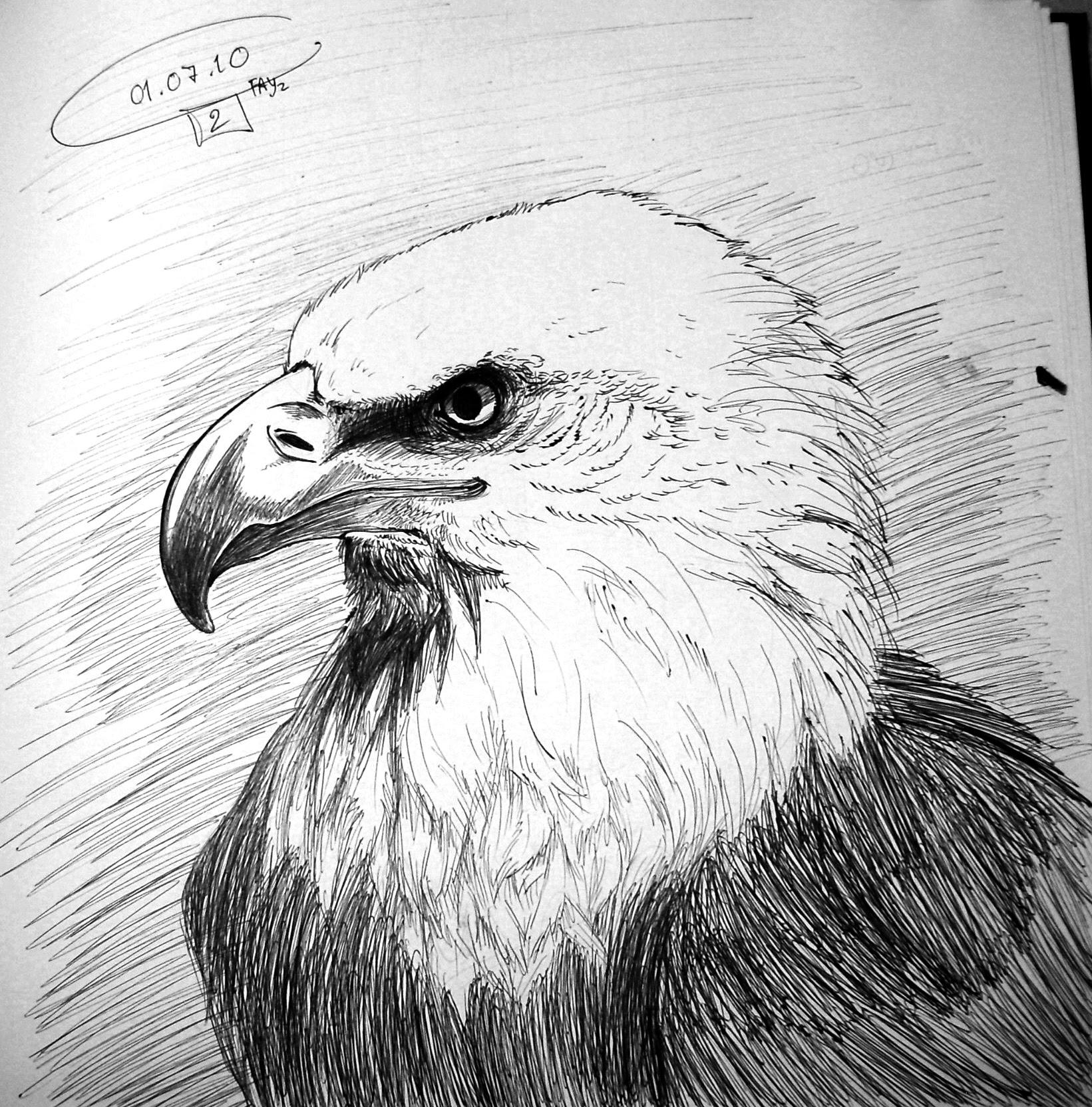 Simple Pencil Drawings Of Eagle - pencildrawing2019