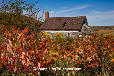Old Schoolhouse and Sumac, Sauk County, Wisconsin