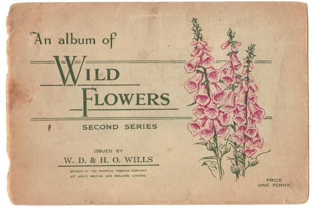Flower Album7