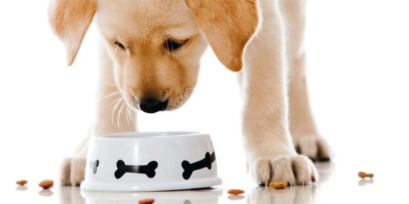 Risultati immagini per cani di piccola taglia cibo