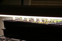 seedlings 021