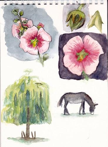 Croquis du jardin - Garden sketches