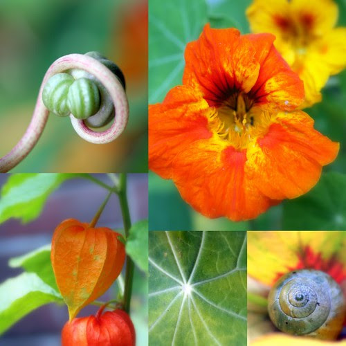 Nasturtium & Friends by Daily Colours