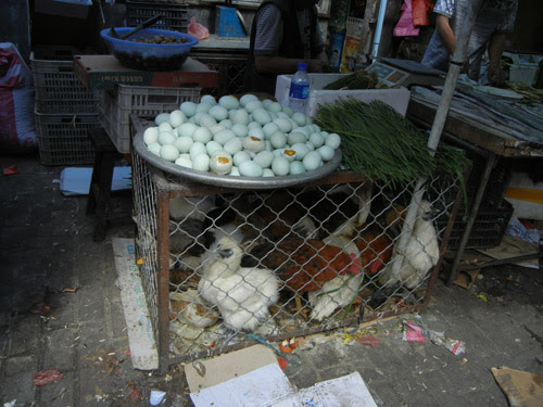 Live Chickens in Cage in Farmer's Market, Shenyang, China _ 0441