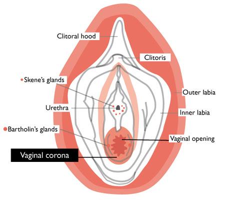 4 Myths About Virginity Everyday Feminism