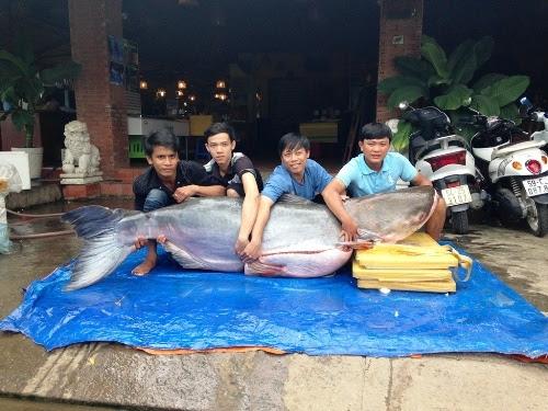 Hình ảnh Ngư dân miền Tây trúng số vì bắt được thủy quái nặng 100kg số 2