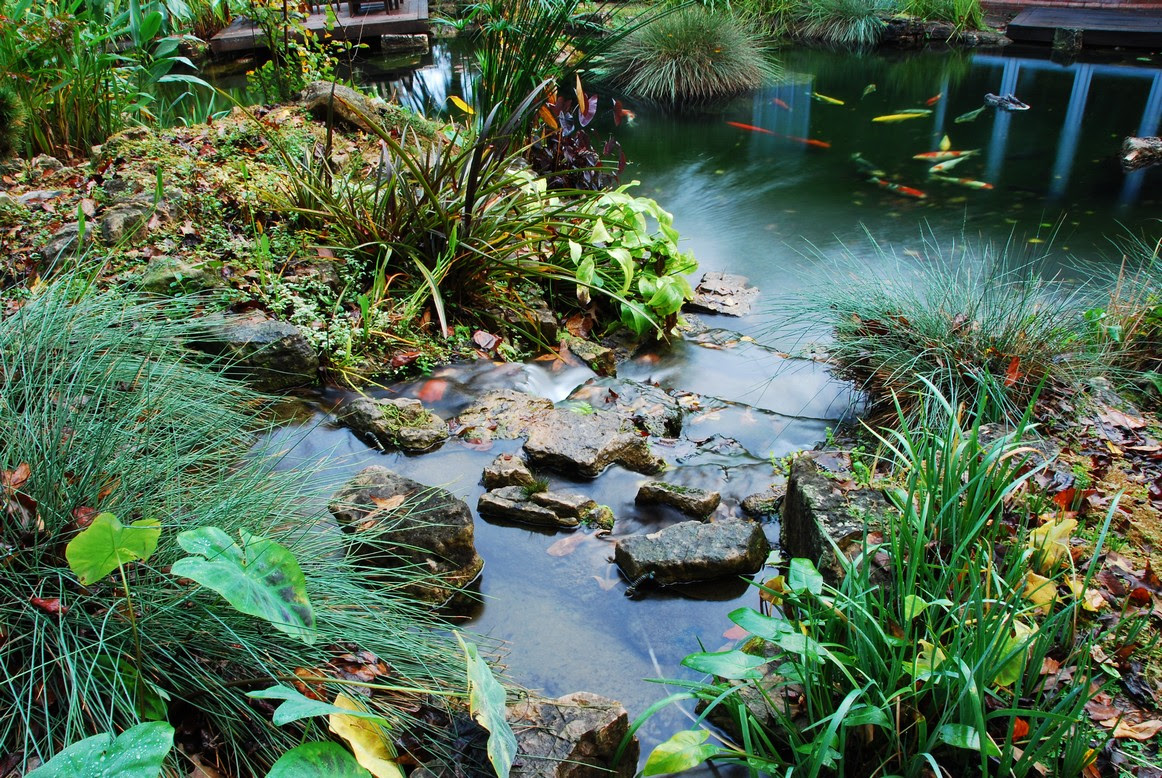 bbf xf20000 on koi pond waterfall