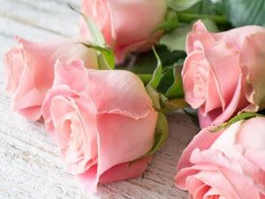 Fondos De Rosas Imágenes Rosas