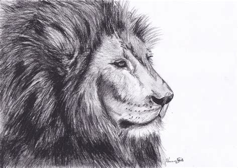 send lion drawing ecard post card animal drawn pic litle