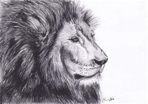 send lion drawing ecard post card animal drawn pic litle