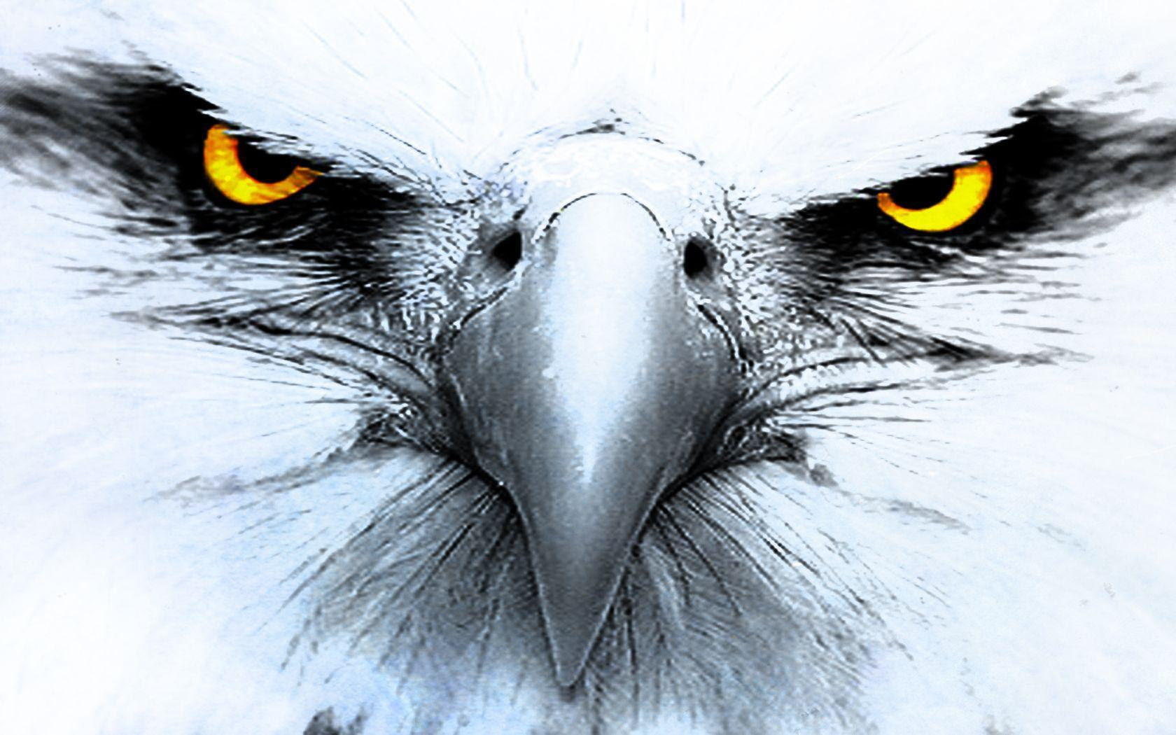 Eagle Backgrounds Pictures - Wallpaper Cave