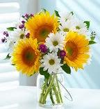 Fresh Summer Sunflower Bouquet