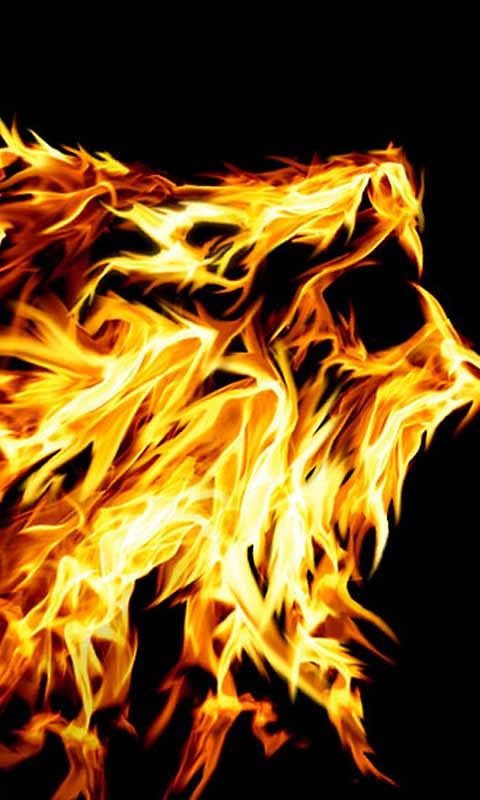 Cool Fire Lion Live Wallpaper Free Android Live Wallpaper ...