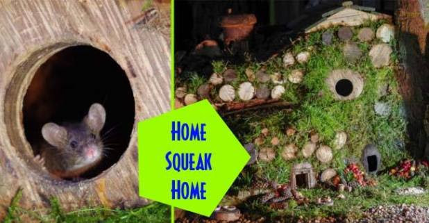 From home sweet home to home Squeak home, this man built a beautiful house for mice