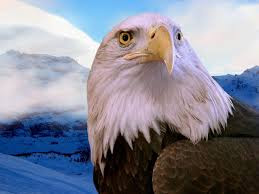The Eagle and other living spirits wait for us to remember how to listen to them.