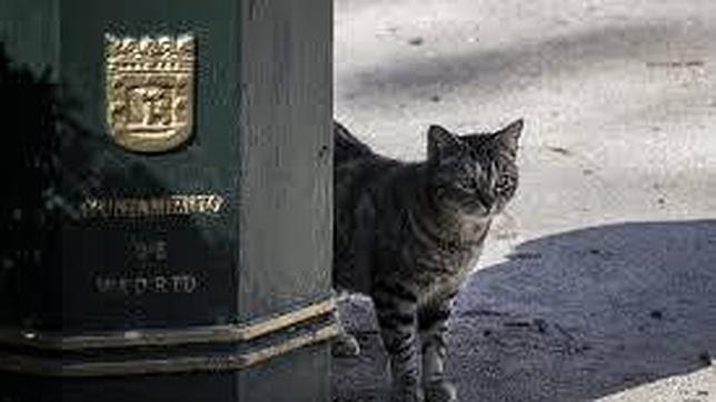 Por qué son «gatos» los madrileños y otros gentilicios sorprendentes