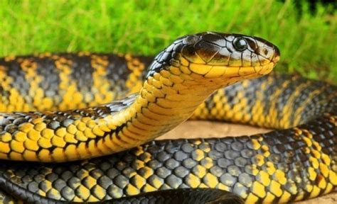 Snakes ? mysterious creatures   Wander Lord