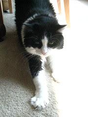 Josie's stretch