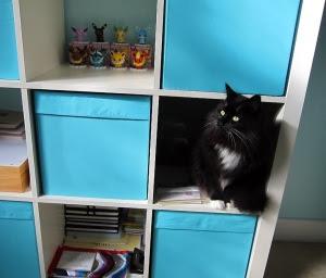 Cubes-cat1